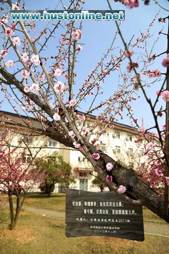 """3月23日,友谊园里又一棵梅树迎来了主人,""""悠悠长青树,绵绵学子情"""""""